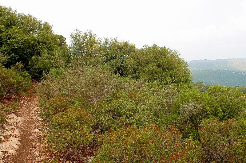 Лес на горе Kармель. Хайфа. (Leon Skigin)